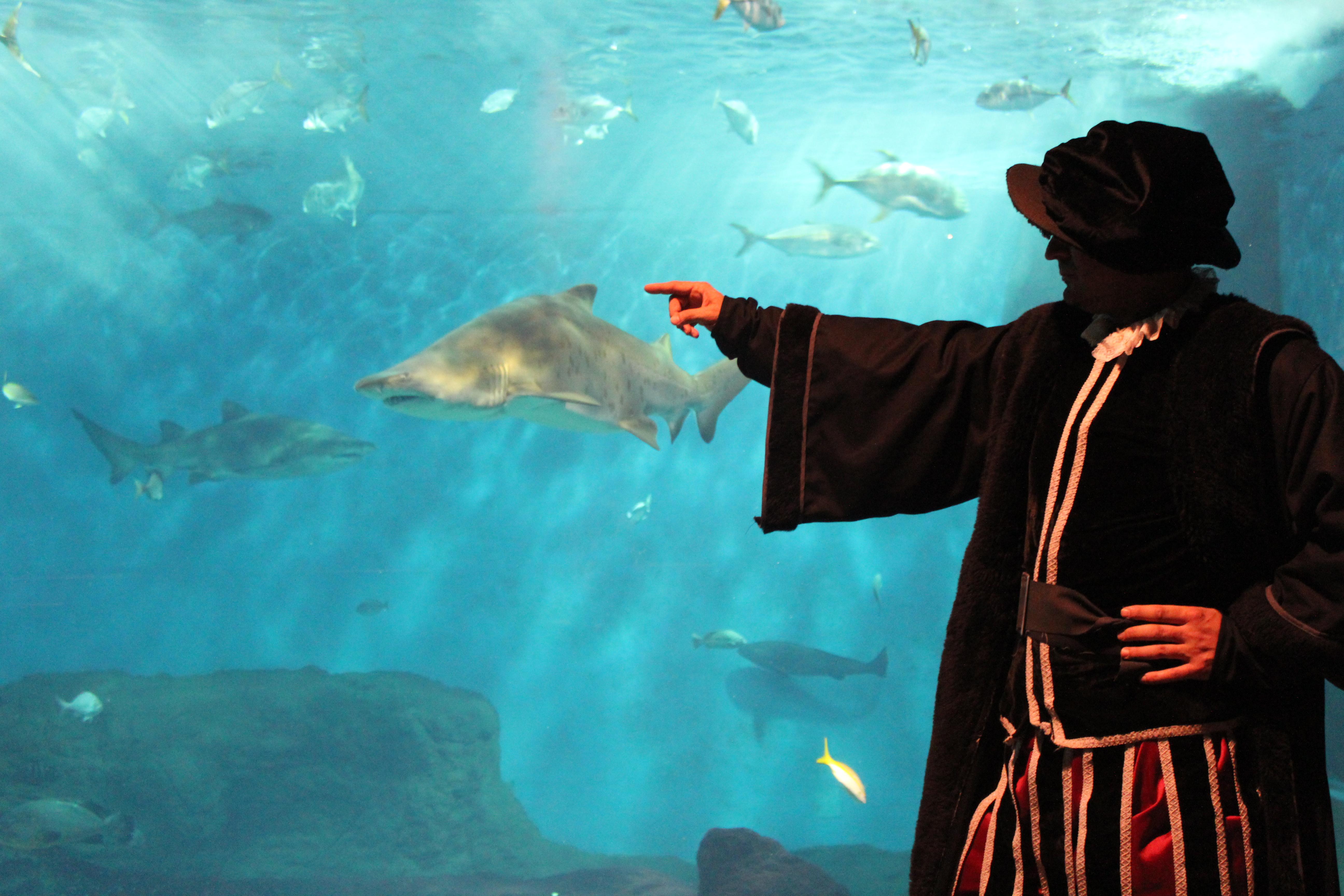 acuario-magallanes-34